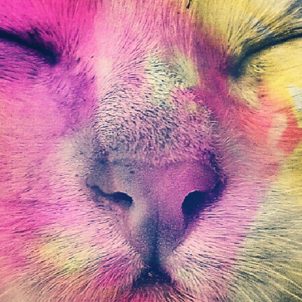 Cat Pink Color Yellow Smile Happy Instagram